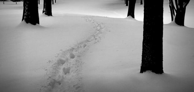 1-footprint-trail-through-the-snow-in-the-woods-randall-nyhof